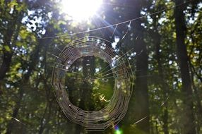 spider web in the autumn forest