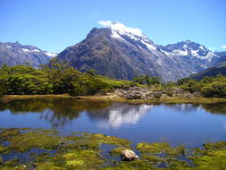 cute new zealand mountains