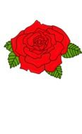 Red rose flower draft
