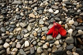red flower on pebbles