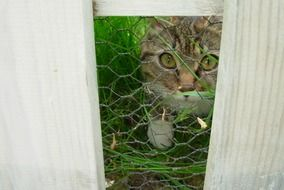 cute cat looking through fence portrait