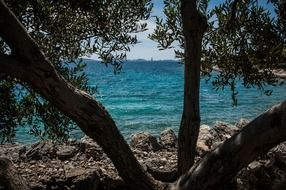view through the trees on the coast of Croatia