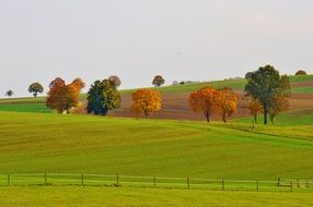 autumn trees in meadow landscape