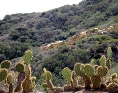 green cacti on hills