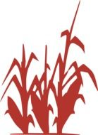 corn plant red silhouette drawing