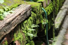wooden fence in green moss