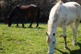 brown and white horses on the pasture