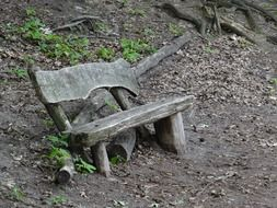 Old wooden bench near a tree in the forest