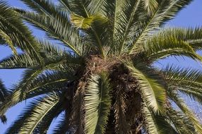 tropical palm tree leafs