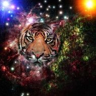 image of the galaxy and the tiger's face