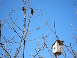 two black birds and a wooden birdhouse on a tree