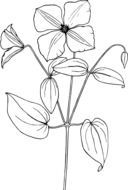 flower plant bloom drawing