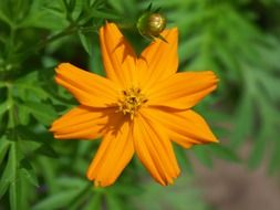 orange flower on a green bush
