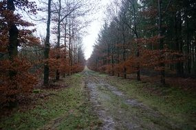 forest road after rain in autumn