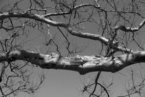 bare tree branch at sky