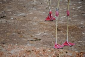 pink legs of flamingos on the ground