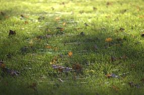 Green grass light dry leaves
