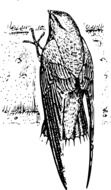 Beautiful Black and white drawing of the bird clipart