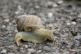 striking snail shell nature