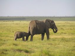 african elephant with a baby