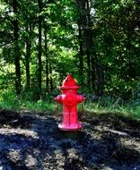 red fire hydrant at green forest
