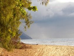 Beautiful sandy beach with colorful plants on Kauai in Hawaii
