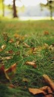 brown autumn leaves on green grass close-up