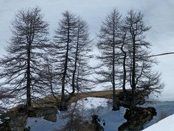 trees on a glacier in the Alps