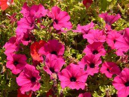 colorful bright pink flowers