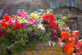 summer flowers in a flowerpot