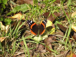 orange butterfly on dry foliage under the bright sun