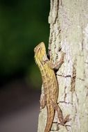Yellow lizard on the tree