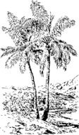 tropical tall tree drawing