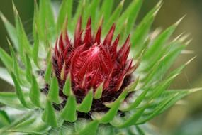 spiny flower in nature