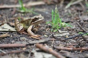 frog on ground among dry leaves