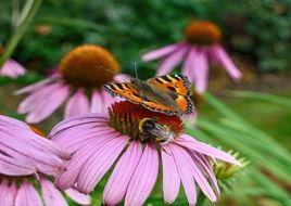 Siting butterfly on a pink flower
