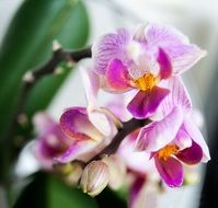 purple-white orchid on the windowsill