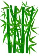 bamboo green leaves drawing