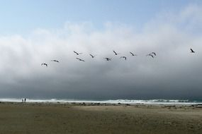 pelican birds over the beach
