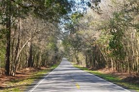empty road in the countryside south carolina