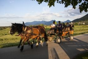 breathtaking horse drawn carriage