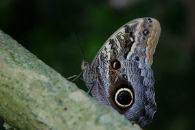 butterfly on a green tree trunk