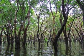 floating forest in Cambodia