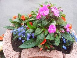 multicolored flowers in a decorative pot