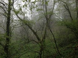 mountain forest in the rain