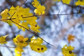 tree branch with yellow leaf