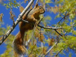 squirrel bushy tail on a branch