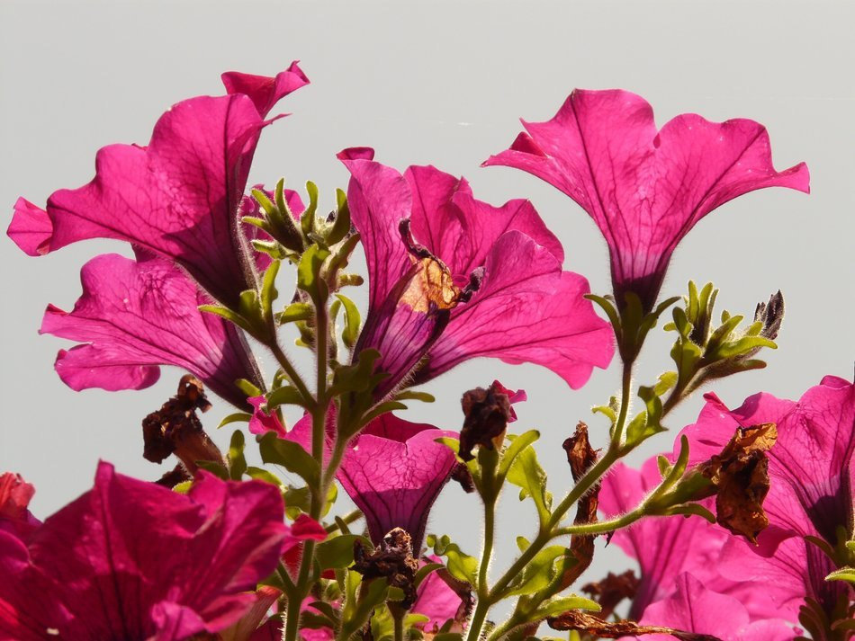 pink flowers on a background of bright sky