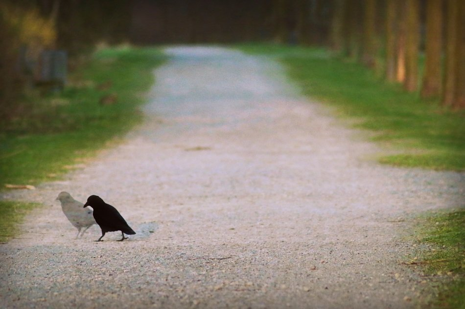 black bird on a country road