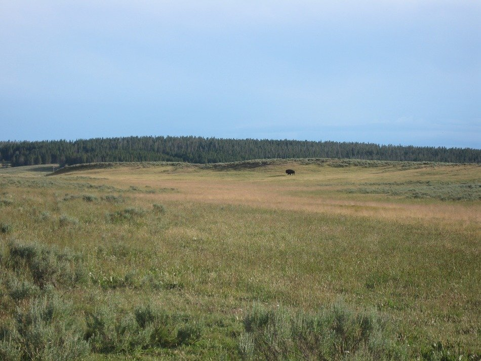 steppe at Yellowstone National Park